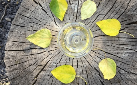 Fall Favorite Wines | Vine Styles YYC