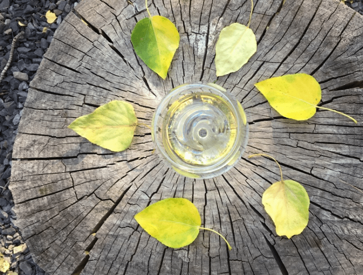 Fall Favorite Wines | Vine Styles YYC