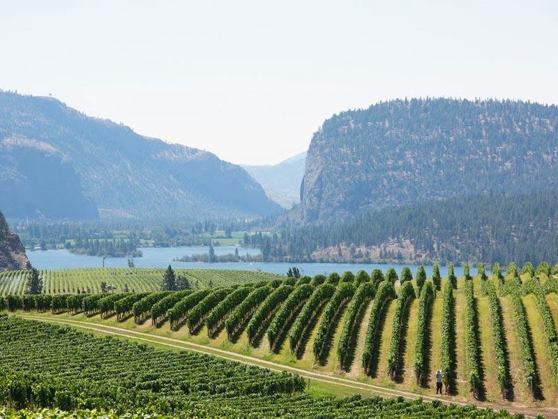 best okanagan wineries, okanagan winery, okanagan vineyards, Mission Hill winery, blue mountain estate winery, Kelowna winery, Kelowna winery to visit