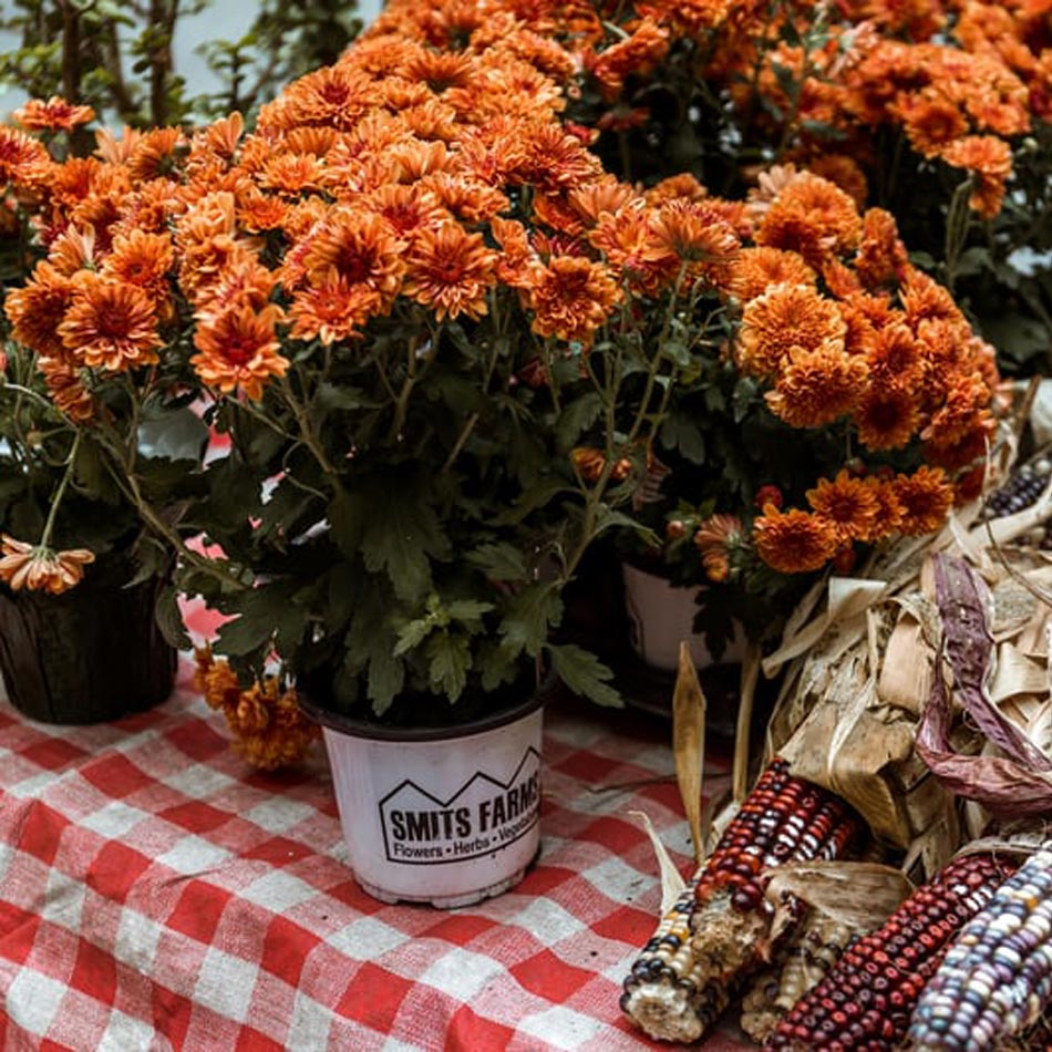 fall floral arrangements, fall floral decor, fall vase arrangements, fall vases, leafy arrangements, wild flower arrangements, fall table design, thanksgiving florals, thanksgiving floral arrangements, potted mums, fall mums